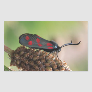 Burnet moth rectangular sticker