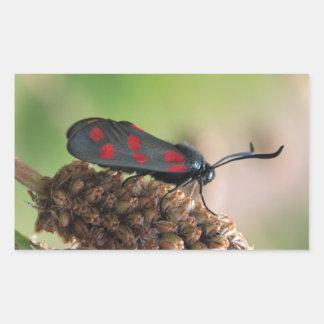 Burnet moth rectangular sticker
