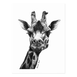Burney the Giraffe Postcard