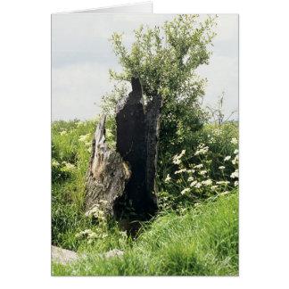 Burnt Tree Stump Card
