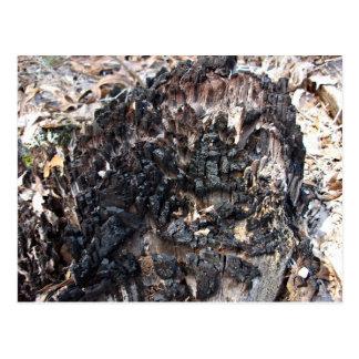 Burnt Tree Stump Postcard