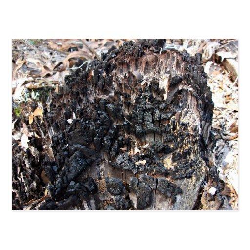 Burnt Tree Stump Post Cards