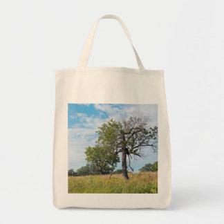 Burr Oak Trees and Prairie