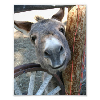 Burro Over Wagon Wheel 8x10 Photograph