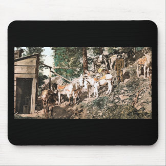 Burros at Silver Mine Colorado 1904 Mouse Pad