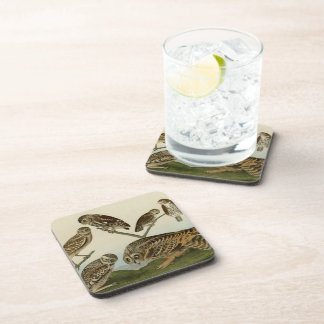 Burrowing Night Columbian and Short-Eared Owls Beverage Coasters