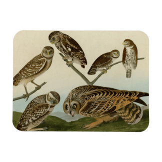Burrowing, Night, Columbian, and Short-Eared Owls Vinyl Magnet