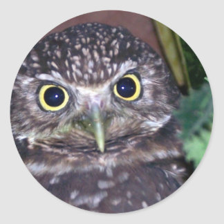burrowing owl 2 classic round sticker