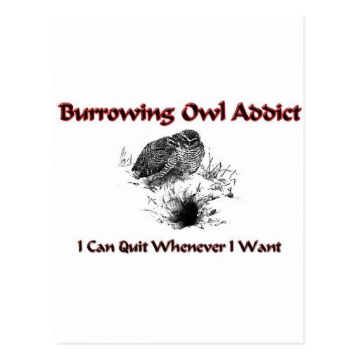 Burrowing Owl Addict Post Cards