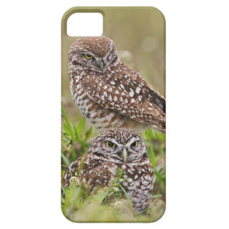 Burrowing Owl, Athene cunicularia, Cape Coral, iPhone 5 Covers