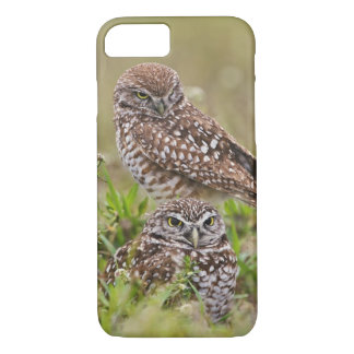 Burrowing Owl, Athene cunicularia, Cape Coral, iPhone 8/7 Case