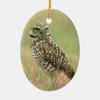 Burrowing Owl Christmas Ornament
