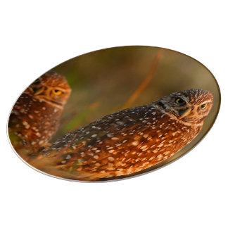 burrowing owl couple porcelain plates