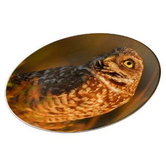 burrowing owl porcelain plates