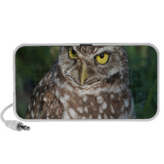Burrowing Owl peace and confidence iPhone Speaker