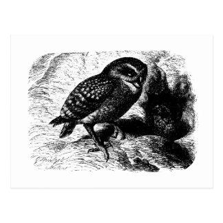 Burrowing Owl Vintage Wood Engraving Postcard