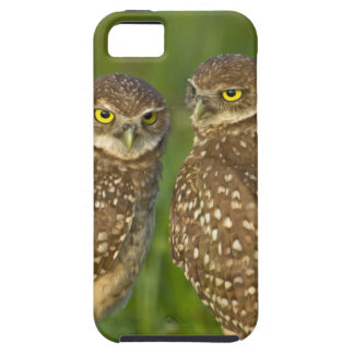 Burrowing owls are a popular site on Marco 2 Case For The iPhone 5
