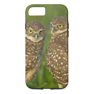 Burrowing owls are a popular site on Marco 2 iPhone 8/7 Case