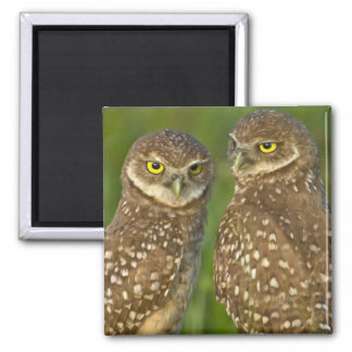 Burrowing owls are a popular site on Marco 2 Magnet