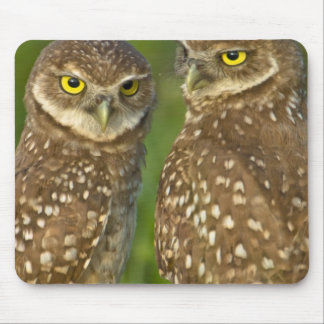 Burrowing owls are a popular site on Marco 2 Mouse Pad