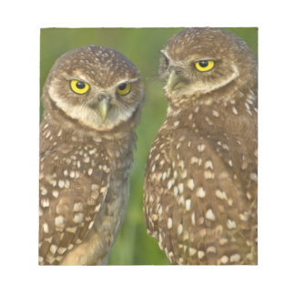 Burrowing owls are a popular site on Marco 2 Notepad