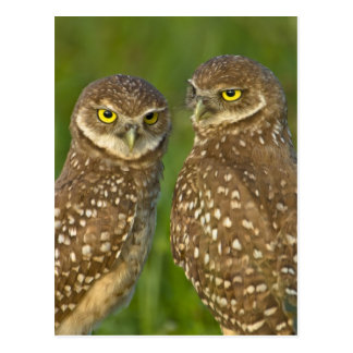 Burrowing owls are a popular site on Marco 2 Postcards