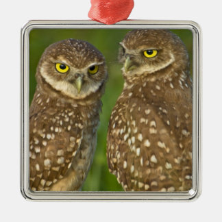 Burrowing owls are a popular site on Marco 2 Silver-Colored Square Decoration