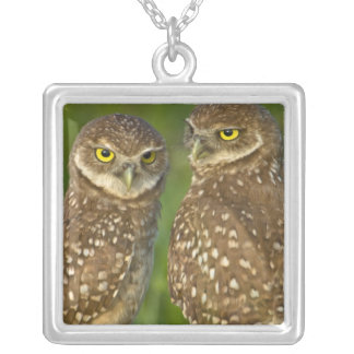 Burrowing owls are a popular site on Marco 2 Silver Plated Necklace