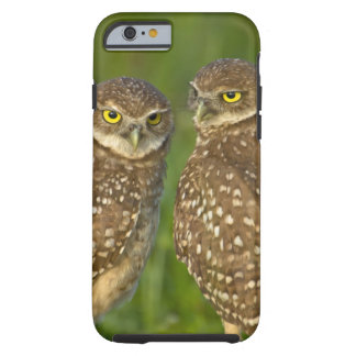 Burrowing owls are a popular site on Marco 2 Tough iPhone 6 Case