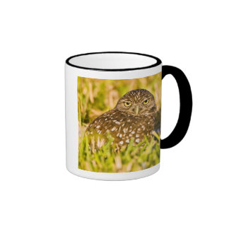 Burrowing owls are a popular site on Marco 3 Mugs