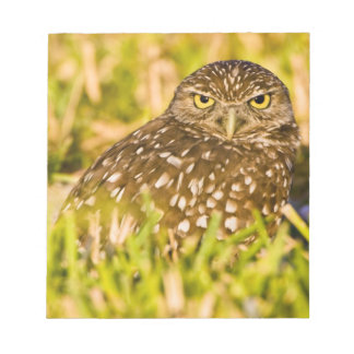 Burrowing owls are a popular site on Marco 3 Notepad