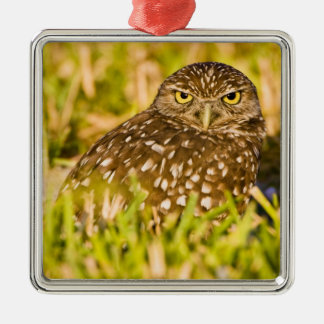 Burrowing owls are a popular site on Marco 3 Silver-Colored Square Decoration