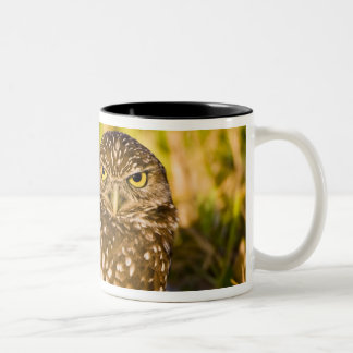 Burrowing owls are a popular site on Marco 3 Two-Tone Coffee Mug