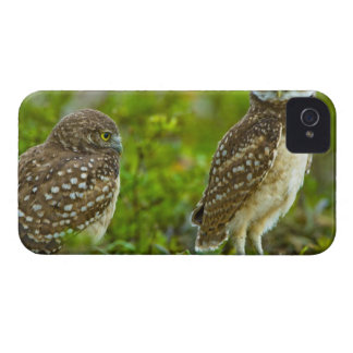 Burrowing owls are a popular site on Marco 4 iPhone 4 Cases