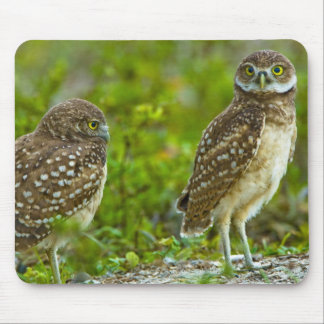 Burrowing owls are a popular site on Marco 4 Mouse Mat