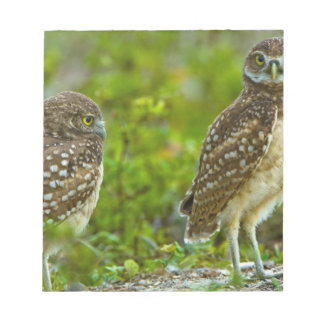 Burrowing owls are a popular site on Marco 4 Notepad