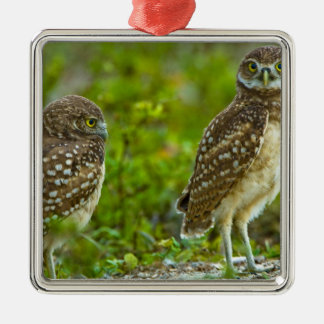 Burrowing owls are a popular site on Marco 4 Silver-Colored Square Decoration