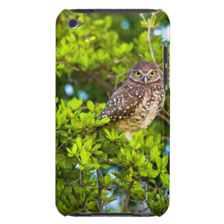 Burrowing owls are a popular site on Marco iPod Touch Cases