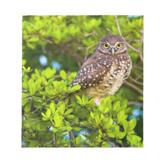 Burrowing owls are a popular site on Marco Notepad