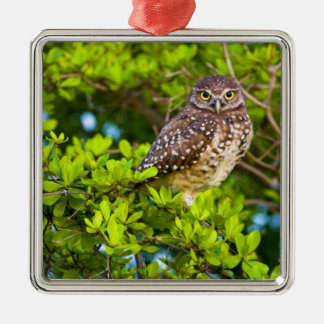 Burrowing owls are a popular site on Marco Silver-Colored Square Decoration