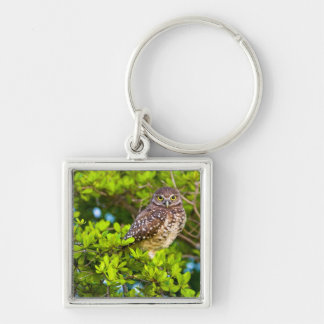 Burrowing owls are a popular site on Marco Silver-Colored Square Key Ring