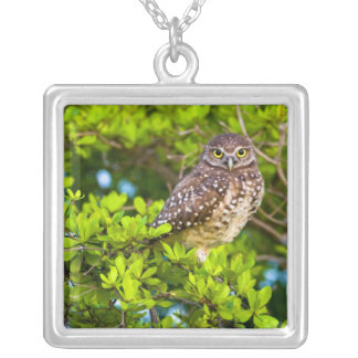 Burrowing owls are a popular site on Marco Silver Plated Necklace