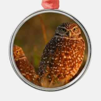 burrowing owls christmas ornament