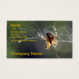 Bus. Card - Spider on Web