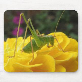 Bush Cricket Mousepad
