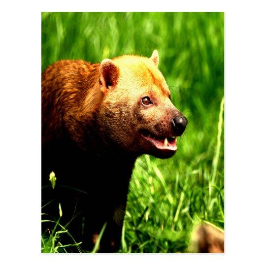 Bush Dog smiling with joy Postcard