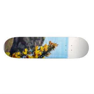 Bush In Blossom On The Jersey Coast Skate Board Decks