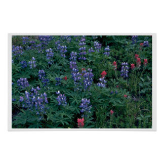 Bush Of Blue And Red Flowers Print