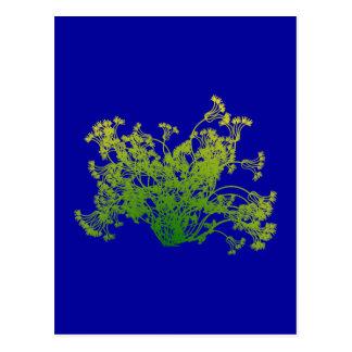 Bush shrub Bush Post Cards