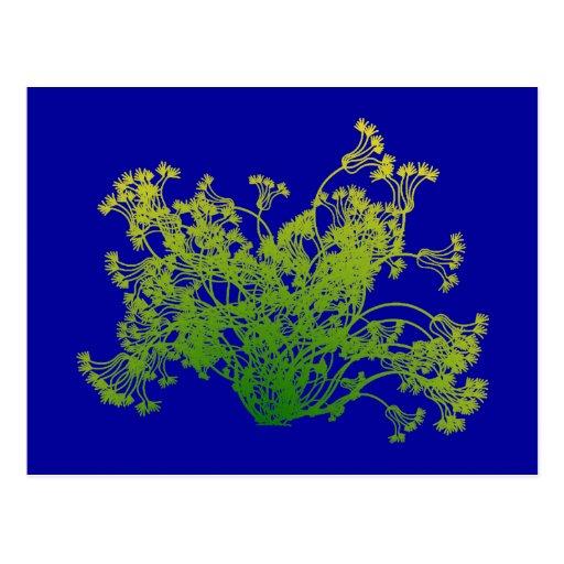 Bush shrub Bush Post Card